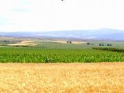 650 ha, zona Sanicolau Mare, teren plan